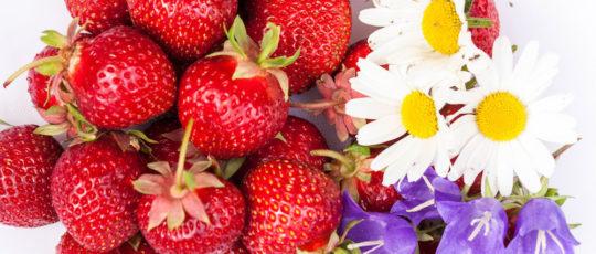 Starkt begränsad mängd svenska jordgubbar till midsommar