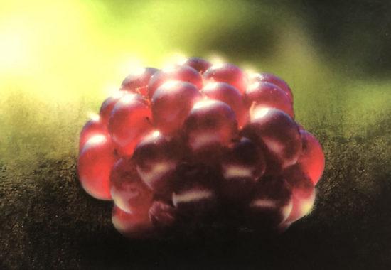 Ny bok: Åkerbär – Europas godaste bär